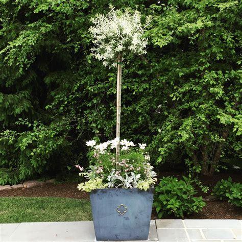 Baum Kübel Winterhart by садовые деревья в горшке в домашних условиях красивые