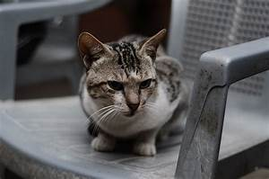 Cat Sitting On Chair Public Domain Pictures