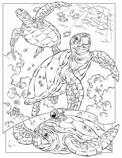 Coloring Ocean Pages Animal Printable