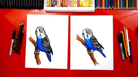 draw  budgie parakeet art  kids hub
