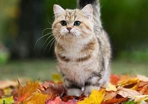 2048 cats 2048 cat edition