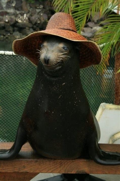 animal pictures  adorable animals wearing hats