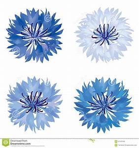 Flower Bloom Icon Set. Cornflower Isolated. Stock Vector ...