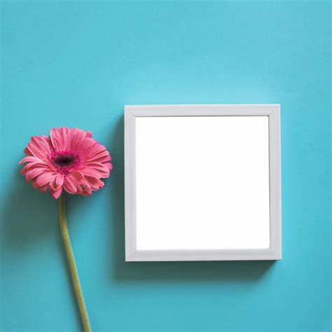 Cornice Foto Gratis - cornice e fiore rosa scaricare foto gratis