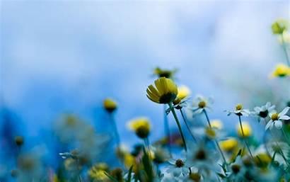 Flower Desktop Summer Flowers Background Wallpapers Backgrounds