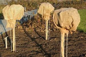 Rosen Winterfest Machen : den garten winterfest machen wichtige tipps f r den schutz empfindlicher freilandpflanzen ~ Orissabook.com Haus und Dekorationen
