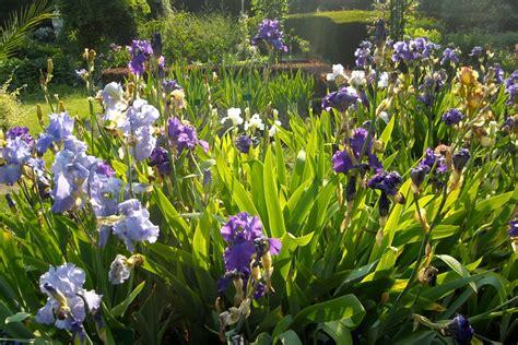jardin des iris et des plantes vivaces jardin des plantes