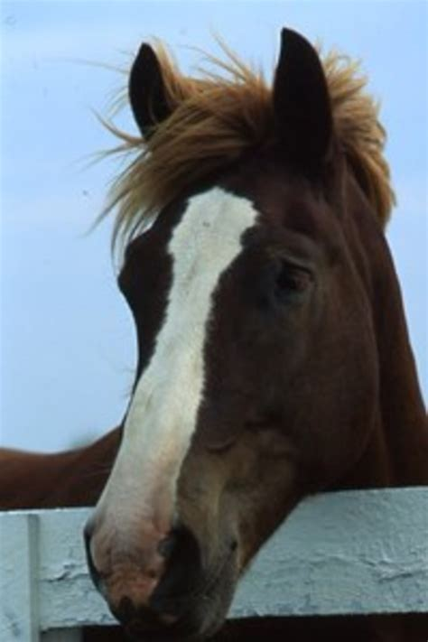 hypoallergenic horses  horse owners resource