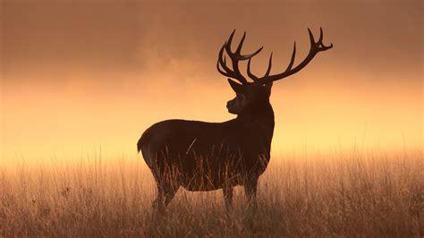 Animal Deer Wallpaper - wallpaper deer silhouette hd animals 6191