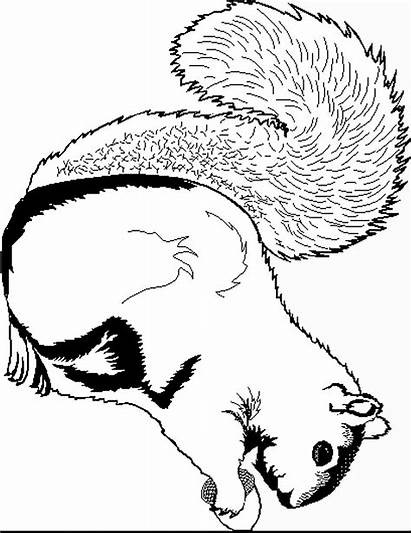 Squirrel Coloring Pages Coloring2print