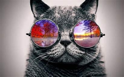 Cat Cool Nature Deviantart Chat Animals Favourites