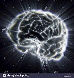 Nervous System Diagram Stock Photos  U0026 Nervous System