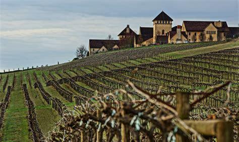 vineyards portland oregon