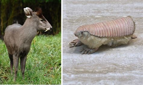 Did You Know These Unusual Animals Existed?