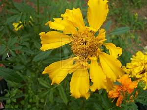 Images of types of yellow flowers golfclub unknown type of yellow flower by jeweliscool99 on deviantart mightylinksfo