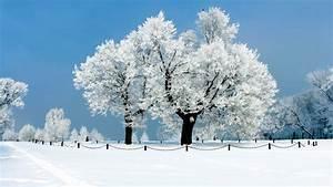 white trees winter hd wallpaper hd wallpapers