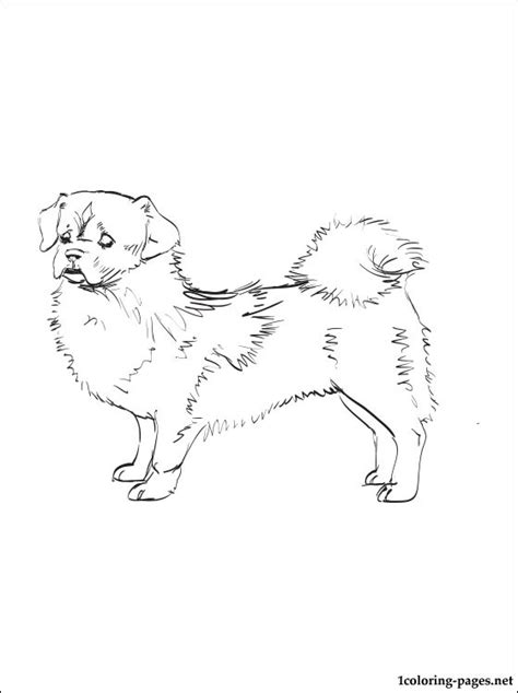 tibetan spaniel coloring page coloring pages