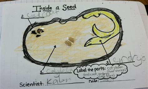 life   stem project  seed diagram