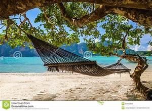 Accrocher Hamac Arbre : hamac accrochant sous l 39 arbre exotique sur la plage photo ~ Premium-room.com Idées de Décoration