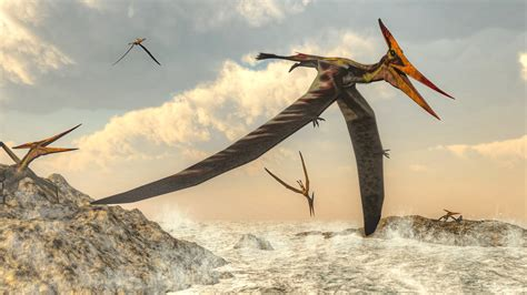 Could Baby Pterosaurs Fly? A Massive Fossil Find Launches