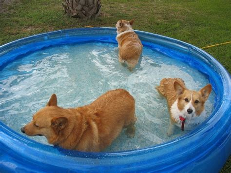 Swimming Pools For Dogs Style