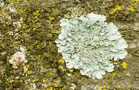 different types of moss what are the different types of plant species with pictures