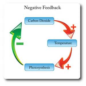 Science Negative Feedback
