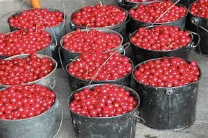 Cherries Are Always In Season For Door County