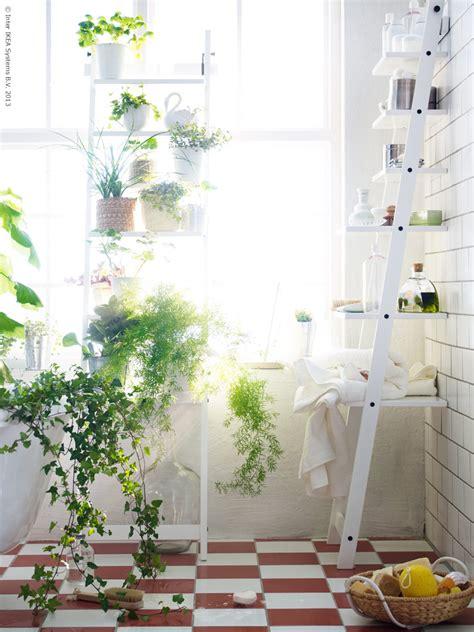Bathroom Fascinating Bathroom Plants Wowing You In Fresh