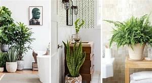 Plante Verte Salle De Bain : 10 plantes parfaites pour la salle de bains ~ Melissatoandfro.com Idées de Décoration