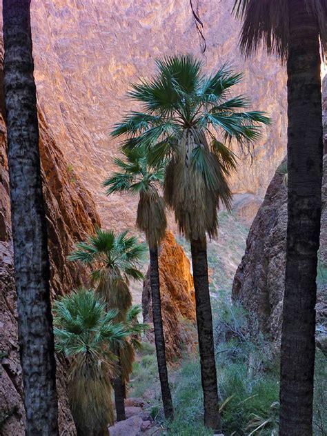 palm canyon kofa national wildlife refuge arizona