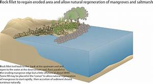 Protecting Our Coasts And Shorelines