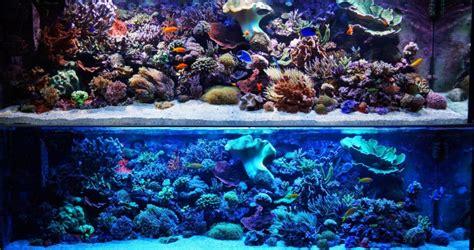 Led Aquarium Beleuchtung Meerwasser