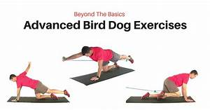 Advanced Bird Dog Exercise Progressions
