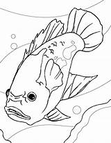 Fish Coloring Pages Aquarium Oscar Printable Drawing Freshwater Sheet Gambar Sheets Catfish Ikan Colouring Mewarnai Fresh Tropical Realistic Akuarium Drawings sketch template