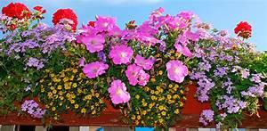 Blumenkästen Bepflanzen Sonnig : blumen archives baldur garten ~ Frokenaadalensverden.com Haus und Dekorationen