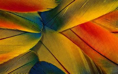 Close Feathers Colorful