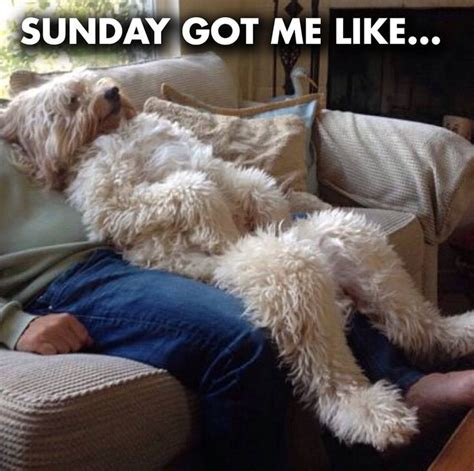 Sunday Meme - 78 best images about weekend humor on pinterest good morning happy saturday happy sunday and