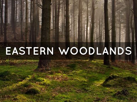 List Of Synonyms And Antonyms Of The Word Eastern Woodlands