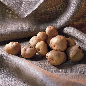 l 233 gumes tubercules pommes de terre etc ferme de