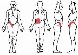 Pin On Kidney Diagram Anatomy