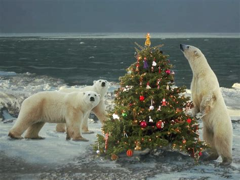 christmas animals photos 2014