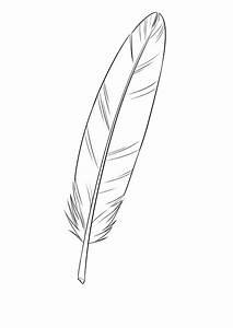 Dessin De Plume Facile : dessiner une plume tape par tape dessindigo ~ Melissatoandfro.com Idées de Décoration