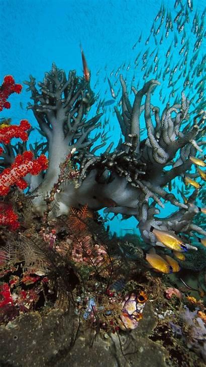Underwater Fish Algae Colored 1080 1920 Wallpapers