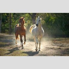 Bilder Braun Pferd Und Weissen Pferd  Pferde Pferde