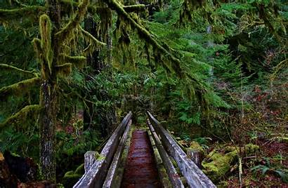 Olympic National Park Staircase Hikes Trail Hike