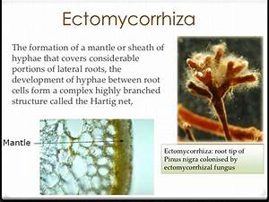 Mycorrhizal association