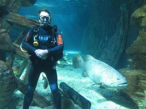 shark dive picture of underwater world sea mooloolaba mooloolaba tripadvisor