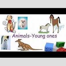 Animals And Their Young Ones, Animals And Their Babies Flash Cards For Preschool Children Youtube