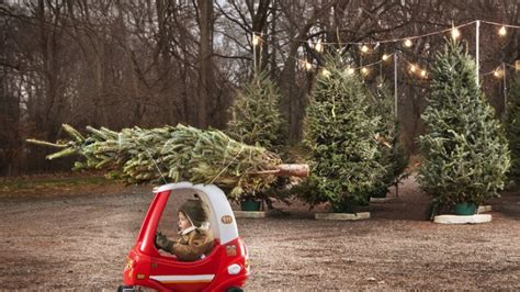 wo man den perfekten weihnachtsbaum kaufen kann berlin